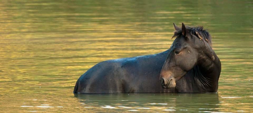 Delta-Pferd